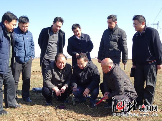 2月15日,正月初八,省小麦专家组成员深入赵县查看小麦苗情、检测土壤墒情,为搞好小麦春季管理掌握第一手资料。