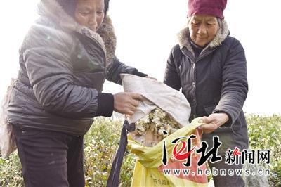 2012河北各县gdp_曹妃甸人均GDP居河北各县第一